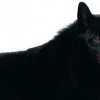 Portrait of Iggy