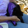 Schipperke party 2011 (pics + video)