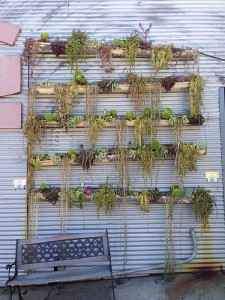 The Wall of Plants