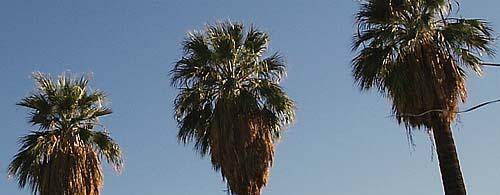Palm Desert, March 10 – 15, 2005