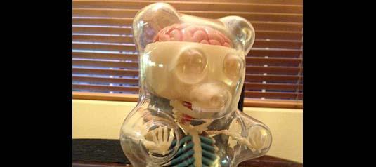 Gummi Bear Anatomy