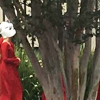 The Handmaids of West Hollywood