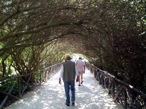 The vine tunnel (that's the back of our tour guide, in the hat)
