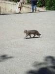 A cat running around the Gardens
