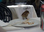 A bird eating from Aviva's plate while I took this picture