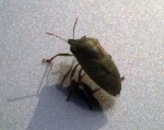 A bug on the roof of my car when we got back from our walk