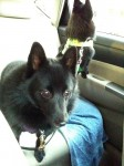 Iggy (in the foreground) and Jett in the back seat
