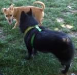 Jett with a puppy
