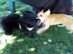 The puppy attacks Jett