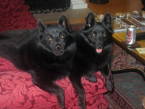 Iggy and Jett