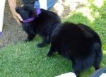 Puppy with a schipp