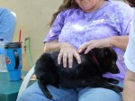 A schipperke in someone's lap