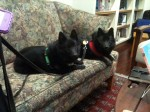 Iggy and Jett at Distant Lands Bookstore