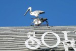 Cool pelican decoration on the roof of a shop