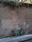Two bicycles leaning against an old wall with honeysuckle