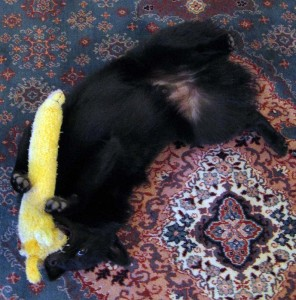 Doggy porn with a toy