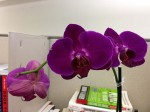 A gift of orchids one of my directs gave me after my promotion