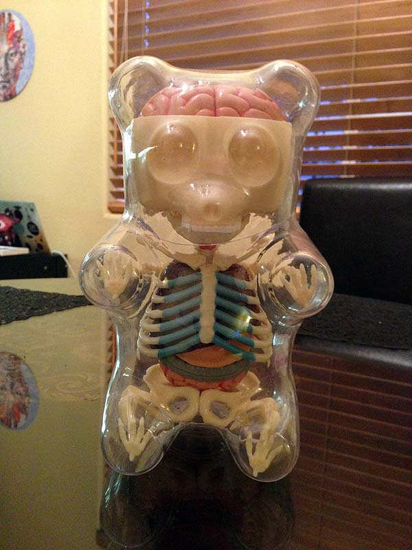 Front View Of The Gummi Bear Anatomy Toy Aleph Naught The Null Set