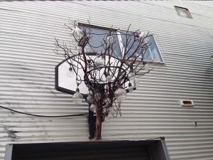 Baskeball hoop outside at Bergamot Station