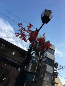 Streetlights decorated with plastic maple leaves